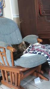 My Cat Lion All Snuggled Up On A Rocking Chair With A ...