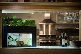 Grow Lamps For House Plants by Addition Indoor Fish Tank Aquaponics On Grow Lights For House Plants