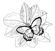 Coloring Pages Flowers Butterfly And Flower Free Printable CoIoring