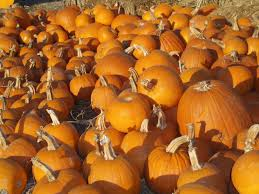Pumpkin Patches Near Colorado Springs Co by Pumpkin Patches For Colorado Mountain Folks