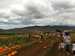 Waimanalo Pumpkin Patch Oahu by Pumpkins Rail And West Oahu Housing Part 2