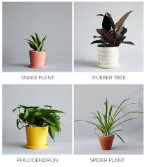 Best Plant For Windowless Bathroom by The Best Plants For Bedrooms And Bathrooms By The Sill
