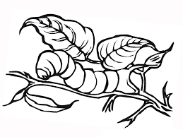 Caterpillar Coloring Pages Free Printable For Kids Online