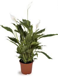 plante d駱olluante bureau greenplus monaco top 10