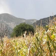 Chatfield Pumpkin Patch Hours by Denver Botanic Gardens At Chatfield Corn Maze 25 Reviews