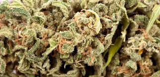 Lights Strain Review