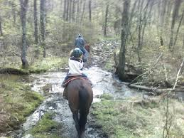 Waterfall trail ride at Shady Grove Dude Ranch Picture of