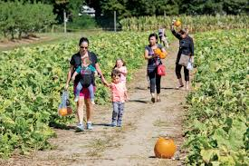 Griffin Farms Pumpkin Patch Alabama by Haunted Harvest What U0027s Saving Family Farms