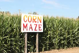 Pumpkin Patch Hayrides Lancaster Pa by Where Can You Find The Best Corn Maze In Lancaster Pa