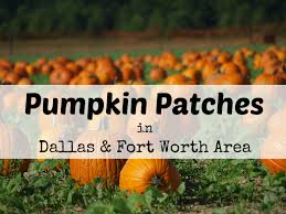 Johnson Farms Pumpkin Patch by Pumpkin Patches In Dallas U0026 Fort Worth North Texas Area 2017