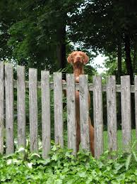 Dog Run Ideas: How To Build A Backyard Dog Run {Guide} | INSTALL ... Cheap Diy Backyard Fence Do It Your Self This Ladys Diy Backyard Fence Is Beautiful Functional And A Best 25 Patio Ideas On Pinterest Fences Privacy Chain Link Fencing Wood On Top Of Rock Wall Ideas 13 Stunning Garden Build Midcentury Modern Heart Building The Dogs Lilycreek Sanctuary Youtube Materials Supplies At The Home Depot Styles For And Loversiq An Easy No 2 Pencil