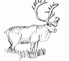 Realistic Animal Coloring Pages Deer On A Grass