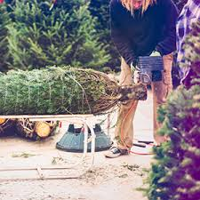 Sugar Or Aspirin For Christmas Tree by 8 Christmas Tree Care Tips For Keeping Your Tree Fresh Taste Of Home