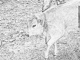 Coloriage A Imprimer La Vache Beau Modèle Coloriage De Vache A In