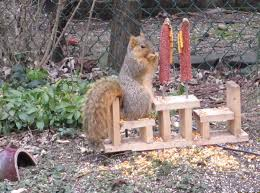 Squirrel Feeder Adirondack Chair by Squirrel Feeder Made By A Friend My Style Pinboard Pinterest