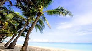 California Beaches Palm Trees Wallpaper Hd