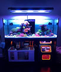 Decorator Crabs Reef Safe by In Wall 500 Gallon Reef Tank Custom Reef Tanks By Aqua Luxury