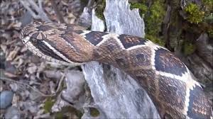 wood carved rattlesnake walking cane 46 youtube