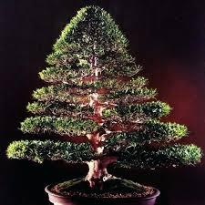 Martha Stewart Christmas Tree Decorations Seed