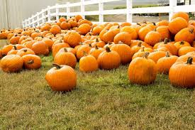 Pumpkin Patch Farms Mississippi by 5 Things To Do In Desoto County Ms This Weekend September 22 24