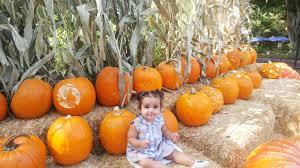 Roloff Pumpkin Patch by Celebrity Kids At Pumpkin Patches 2017 Instagram Photos