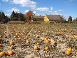 Best Pumpkin Patch Indianapolis by Hilger Family Farms Pumpkin Patch Indiana Adventures Pinterest