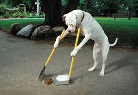 Dog2.jpg Keep Odors Locked Inside With The Poovault Best 25 Dog Run Yard Ideas On Pinterest Backyard Potty Wichita Kansas Pooper Scooper Dog Poop Cleanup Pet Pooper Scoop Scooper Service Waste Removal Doodycalls Doodyfree Removalpooper 718dogpoop Outdoor Poop Garbage Can This Is Where The Goes 10 Tips To Remove Angies List Top Scoopers Reviewed In 2017 Backyards Wonderful 1000 Ideas About Backyard Basketball Court Station Bag Dispenser I Could Totally Diy This For A
