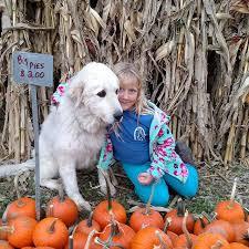 Pumpkin Patch Yuma Az Hours by Benton Farms Benton Family Farm