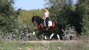 Poured Rubber Flooring For Horses by Welcome To Sense For Horses Sense For Horses