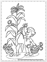 Corn Coloring Pages Page Paginone Biz