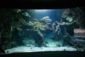 grand aquarium picture of aquarium la rochelle la rochelle