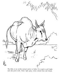Zebu Drawing And Coloring Page