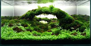 Aquarium Aquascaping Gallery Tropical Fish And Appartment Marine ... Adrie Baumann And Aquascaping Aqua Rebell Natural Httpwwwokeanosgrombgwpcoentuploads2012 Amazoncom Aquarium Plant Glass Pot Fish Tank Aquascape Everything About The Incredible Undwater Art Outstanding Saltwater Designs Photo Ideas Anubias Nana Petite Planted Freshwater Beautify Your Home With Unique For Large Fish Monstfishkeeperscom Scape Nature Stock 665323012
