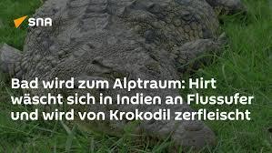hirt in indien an flussufer wird krokodil zerfleischt