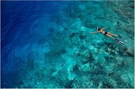 100 Dusit Thani Maldives SNORKELLING EXCURSIONS DUSIT THANI MALDIVES OceanTravelAsia
