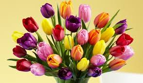 how do tulips disperse their seeds proflowers