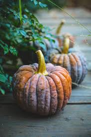 The Great American Pumpkin Patch Arthur Il by 110 Best Autumn Images On Pinterest Autumn Fall Autumn Leaves