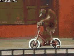 Monkey Riding Bike GIFs