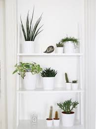 Good Plants For Bathroom by Bathroom Design Magnificent Hanging Plants In Bathroom Bathroom