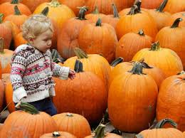 Preserving A Carved Pumpkin by How Long Does A Pumpkin Last The Salt Npr