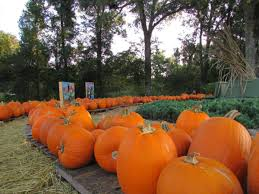 Lakeview Pumpkin Patch by Mapping The Pumpkin Patches In Greater New Orleans