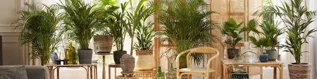 palmen bakker