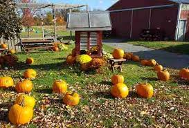 Pumpkin Picking In Freehold Nj by Best Apple Picking In Nj New Jersey Orchards To Visit Thrillist