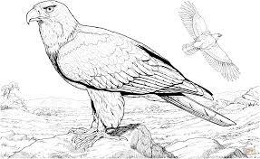 Coloriage Aigle Les Beaux Dessins De Nature à Imprimer Et Colorier