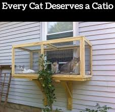 cats on deck 132 best kitty images on animals cat stuff and cats