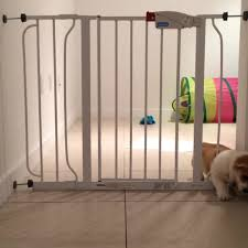 Dog Escapes Kitchen Prison | Jukin Media 100 Dog Escapes Backyard Run Ideas How To Build A To Guide Install Homer The Beagle Capes Home Heads Kids School Determined Cannot Be Fenced Im Not Stalking You Wearing Gopro Camera Jukin Media Annie The Heat Youtube Escape Artist Climbs Fence Creative Country Scenes Coloring Book For Adults Adult Qa More Help Dogfriendly Gardens Sunset Funny Puppy Kennel