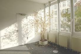 vide chambre plante ensoleillement blanc maison sol intérieur fenêtre maison mur