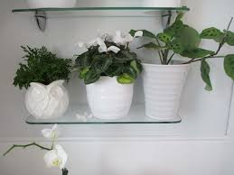 Best Plant For Bathroom by Best Plants For Bathrooms U2013 20 Indoor Plants For The Bathroom