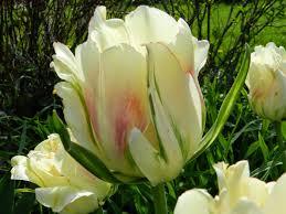 prairie s garden may garden bloom day