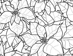 Line Drawing Of Poinsettias